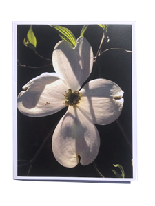 Dogwood Flower Notecard Set